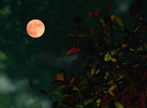 浄化・満月(夏至から1週間)~再会に向けた浄化~